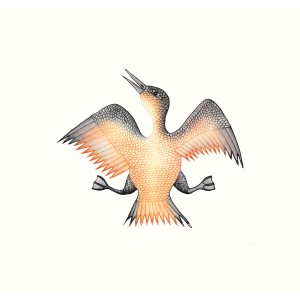 CEE POOTOOGOOK 1967 - Jubilant Bird