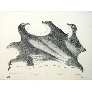 KAKULU SAGGIAKTOK 1940-2021 - Birds Become Seals